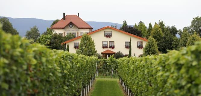 """Weingut & Gästehaus """"Villa Hochdörffer"""" in Landau-Nußdorf"""