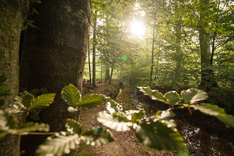 Waldromantik in der Südpfalz