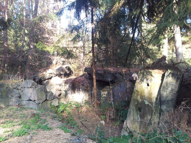 Westwallbunker im Bienwald