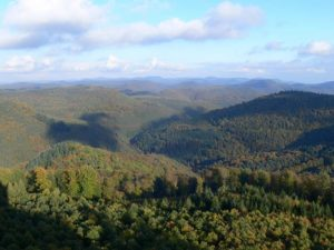Naturpark & Biosphärenreservat Pfälzerwald - Blick vom Luitpoldturm aus