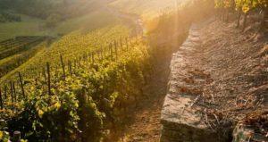 Weinbaugebiet Nahe - Weinbau im Alsenztal, Moscheltal und Appeltal