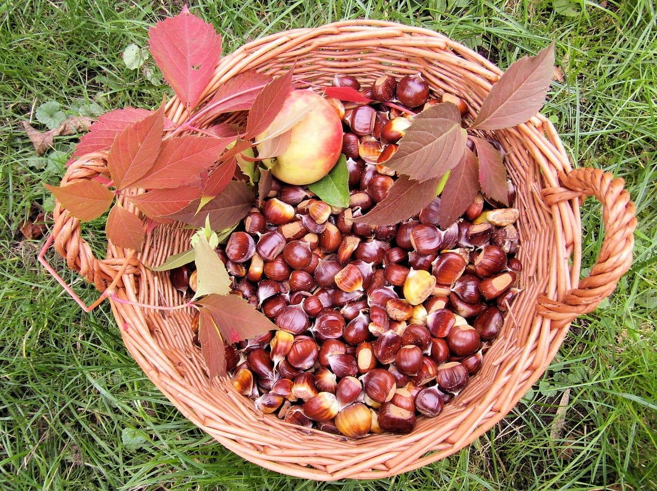 Der goldene Oktober in der Pfalz