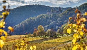 Der Blick auf die Burgruine Landeck bei Klingenmünster in der Pfalz im Herbst