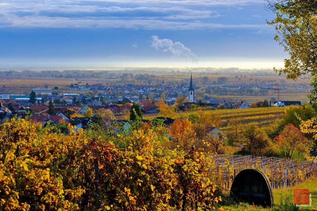 Blick auf Maikammer in der Pfalz © Bernhard Wingerter