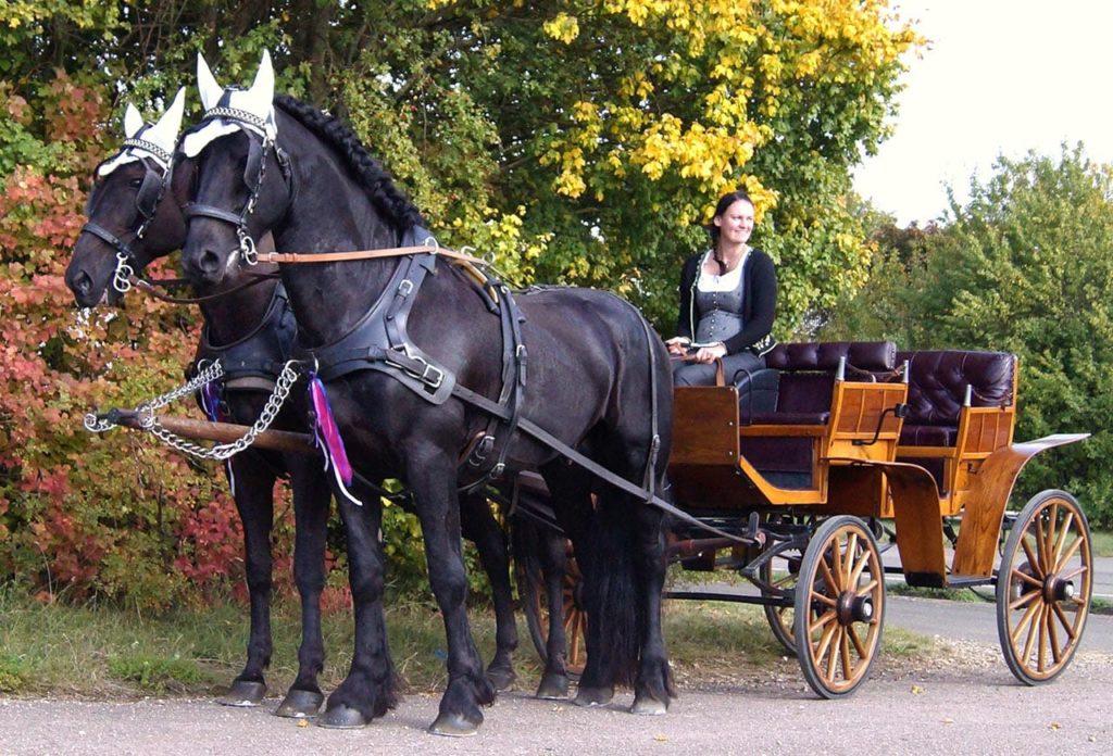 Hochzeitskutschenfahrt zum Standesamt - Pfalz
