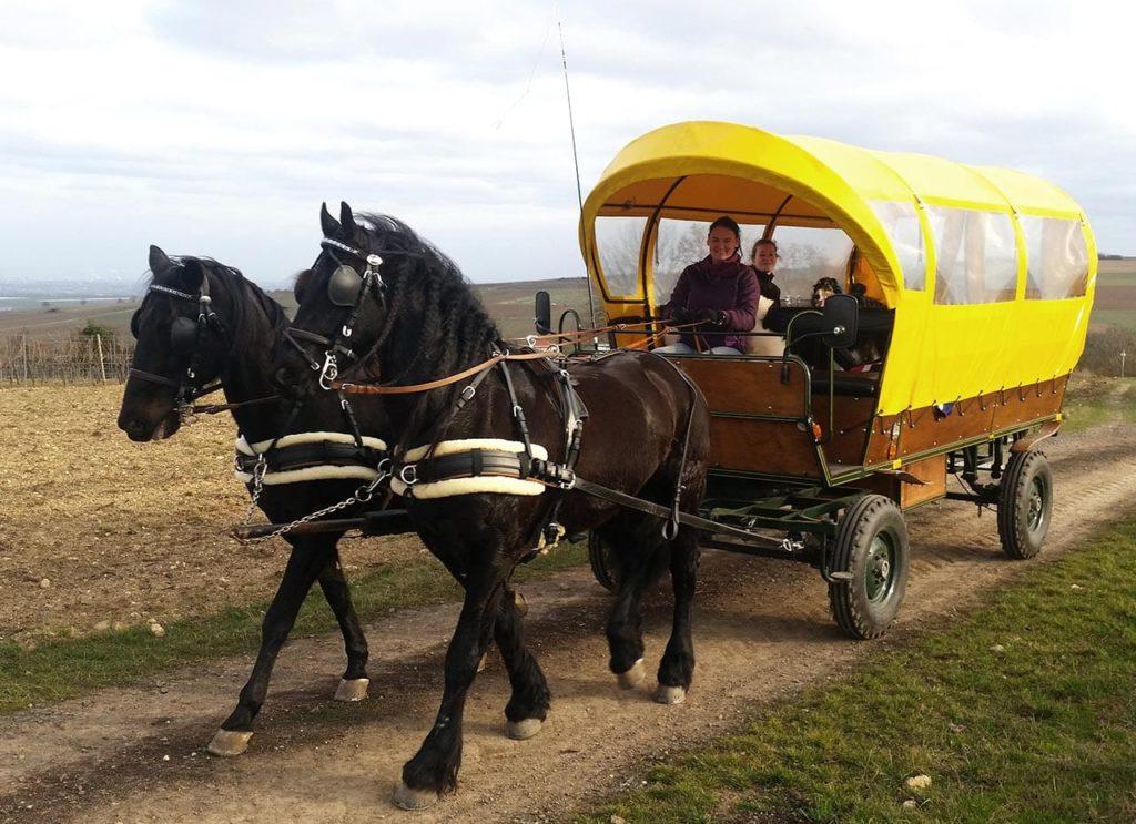 Planwagenfahrt mit Pferden in der Pfalz