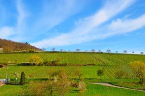 """Die Aussicht vom """"Castell"""" in Leinsweiler"""