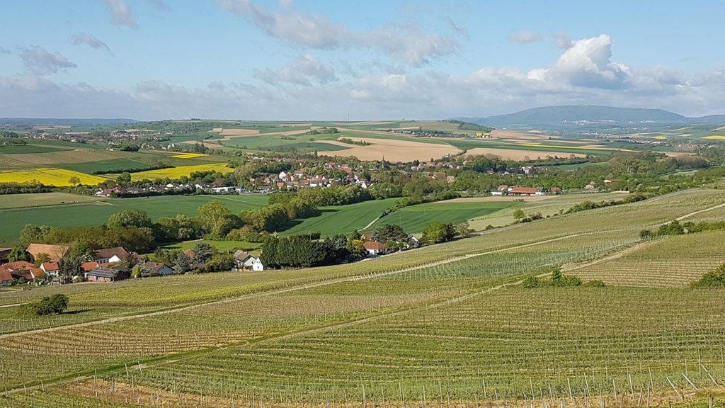 Der Blick auf den Donnersberg vom Zellertal aus